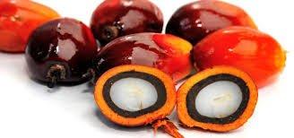 bioethanol palm oil