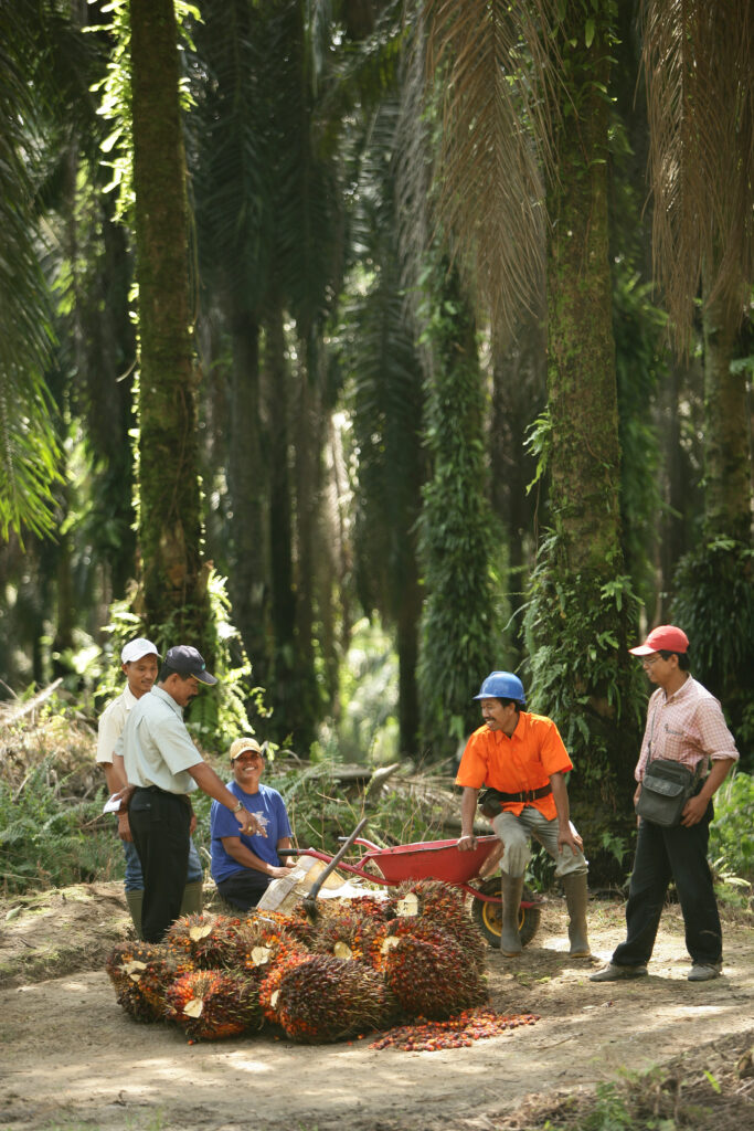 Oil Palm Plantation Partnership